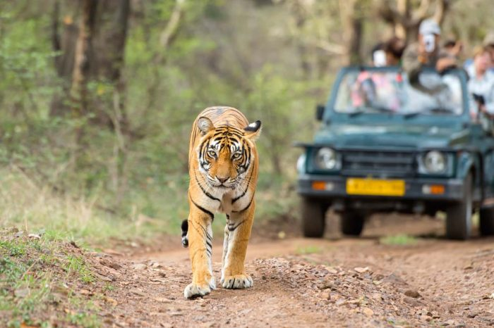 Ranthambore Safari by Private Jeep