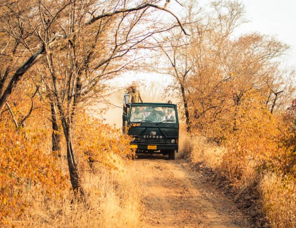 Canter safari in Ranthambhore National Park