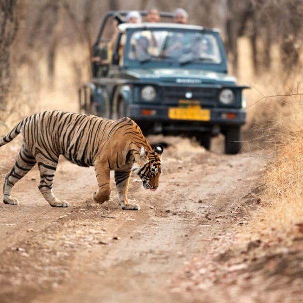 Private Jeep safari in Ranthambhore National Park